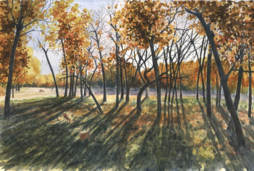 fall shadows 14x20 lo res.jpg