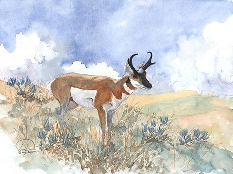 Antelope study #3 9x12 lo res.jpg