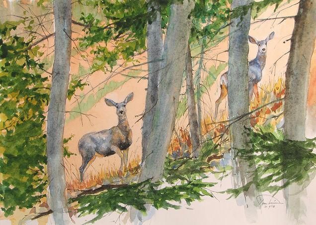 #10 Paul Tunkis - Mule Deer Startled - 1