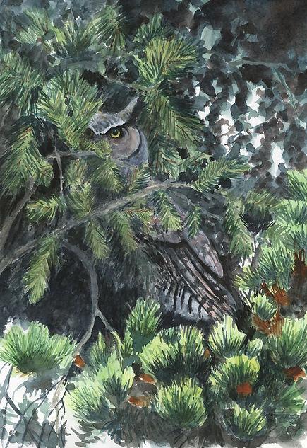 Hidden Owl 12x16 lo res.jpg