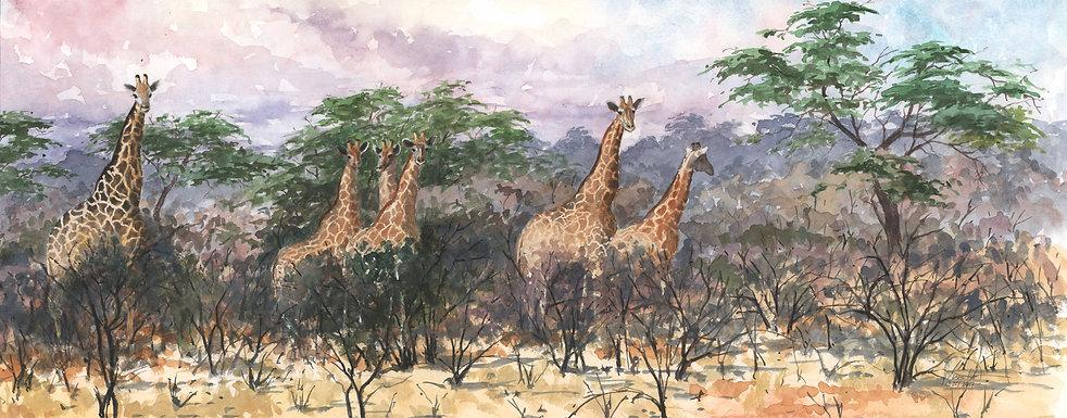 Giraffes Panorama 9 x 20 lo res.jpg