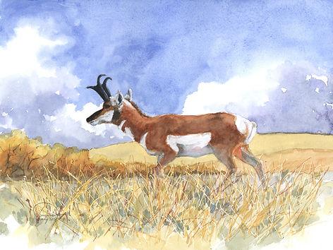 Antelope study #4 9x12lo res.jpg