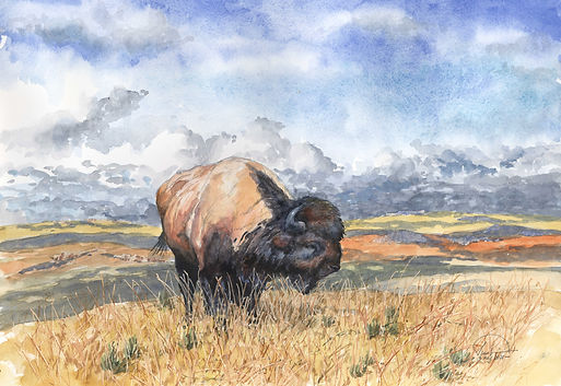 Yellowstone Bison 12x16 lo res.jpg