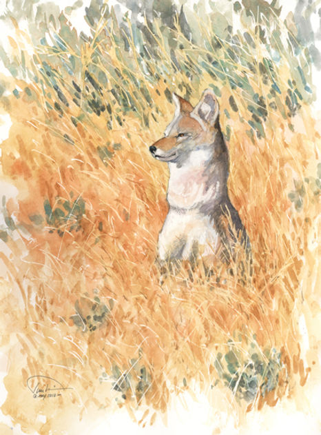 Coyote on alert - 9x12 lo res.jpg