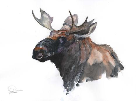 Moose Study 10x13 lo res.jpg