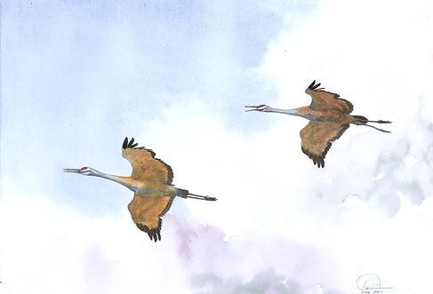 2 Sandhill cranes 12x16 lo res.jpg