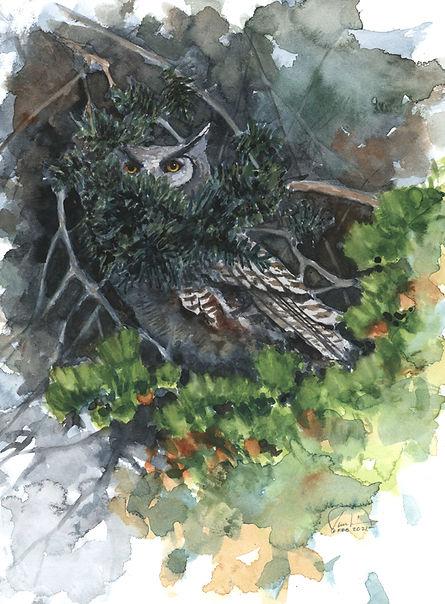 Owl study #4 9x12 lo res.jpg