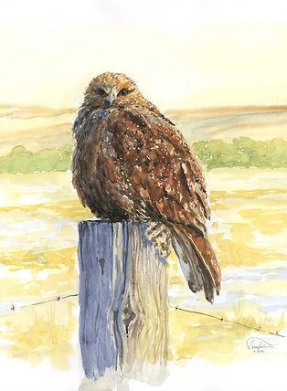 Hawk at Dawn 10 x 14 lo res.jpg