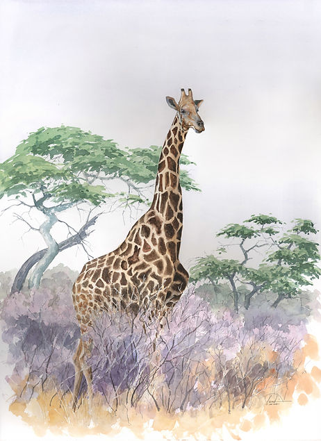 giraffe 22x30 lo res.jpg