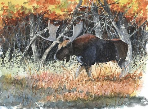 Moose 9x12 lo res.jpg