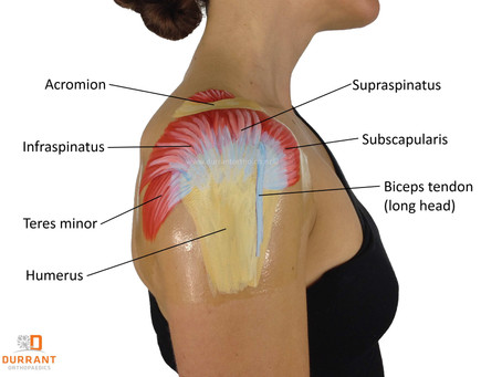 Rotator Cuff Injuries and Benefits of Medical/Sports Massages