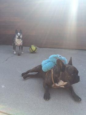 Soph + Lou Playtime.png