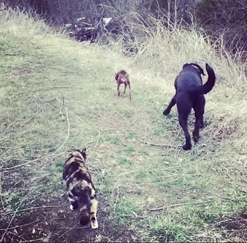 Rosie + Sparrow + Twist Hike.png