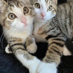 Trixie & Katya