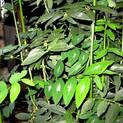 multivitmin-plant