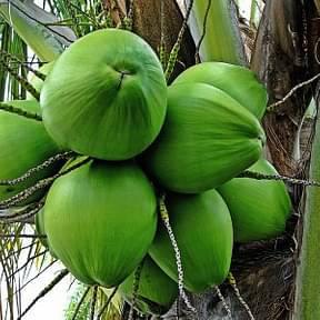 Nariyal,-Coconut
