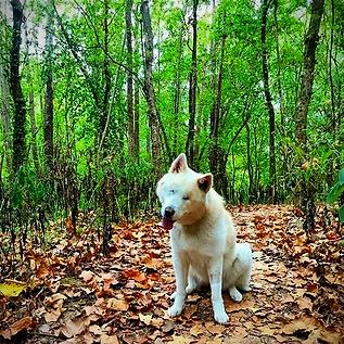 Dog on a trail