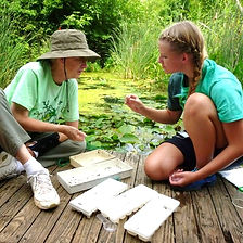two women on small dock examining aquatic organisms at ijams