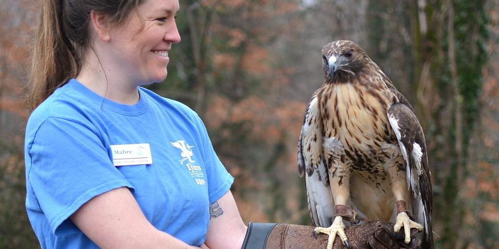 Beginning to Bird: Hawk Migration (Adult Program)