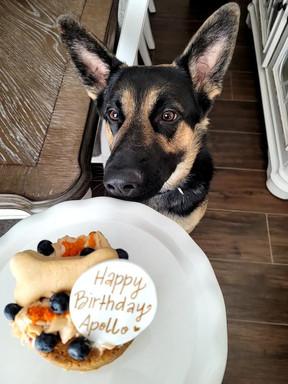 Pup Cake