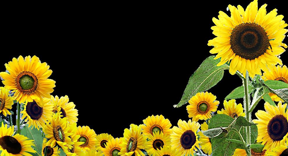 PNGIX.com_sunflowers-png_176699.png