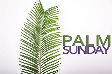 palm_20214ac.jpg