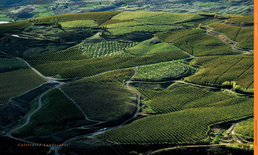 Cultivated Landscapes
