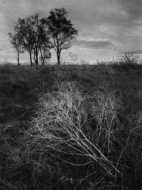 Steptoe Battlefield I