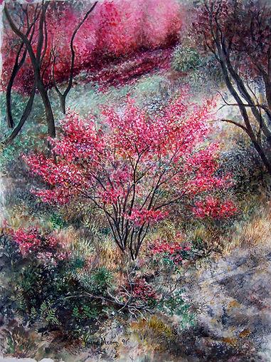 Redbush.jpg