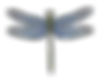 dragonflyfavicon.png