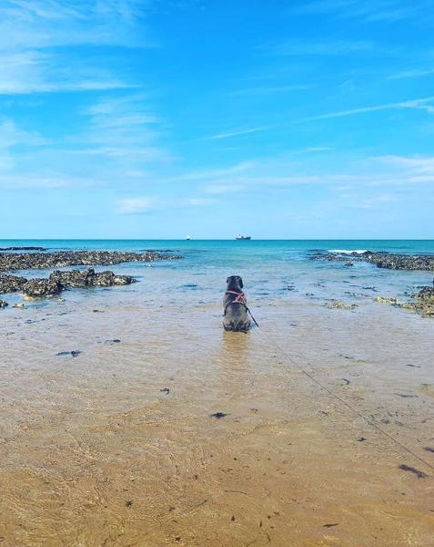 Margate beach with dog having a wellbeing walk