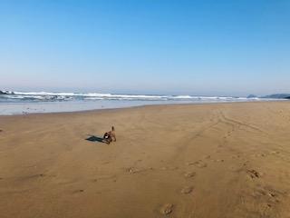 Suki Thompson's dog on a beach getting some fresh air