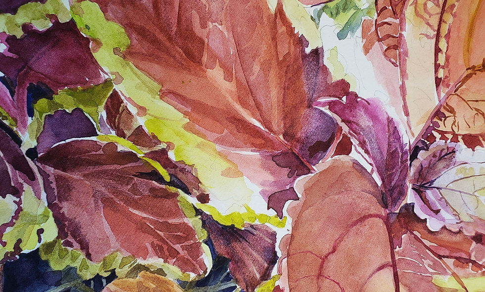 Watercolor  Inspiration from Nature