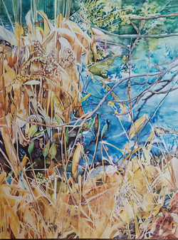 Reeds and Grass
