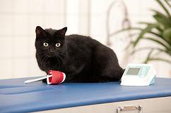 Blutdruckmessung |Kleintierkardio