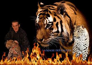 Show de magie avec tigre et panthère - france - axel et kelly