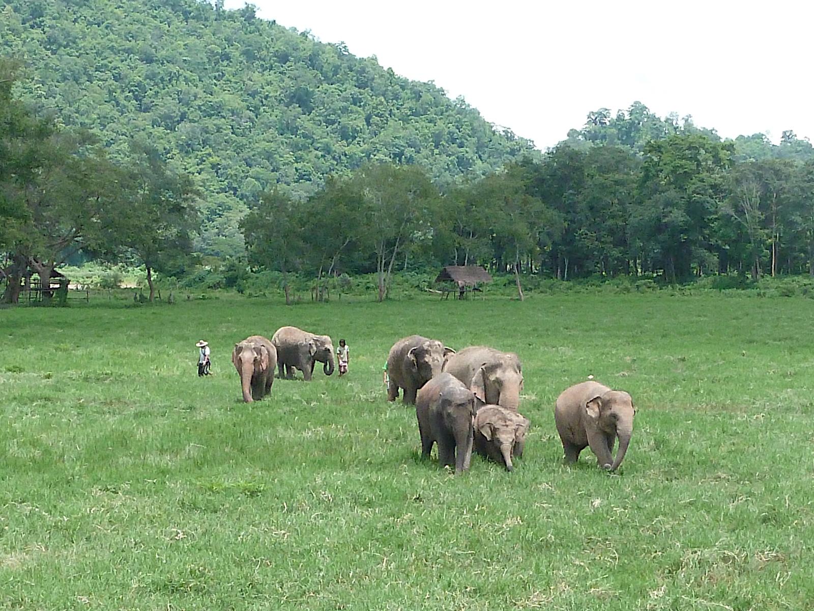 Elephant Nature Park_08_10 1054