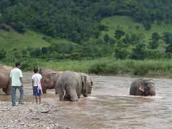 Elephant Nature Park_08_10 091