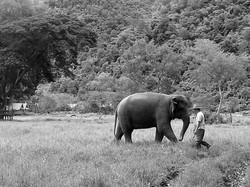 Elephant Nature Park_08_10 974