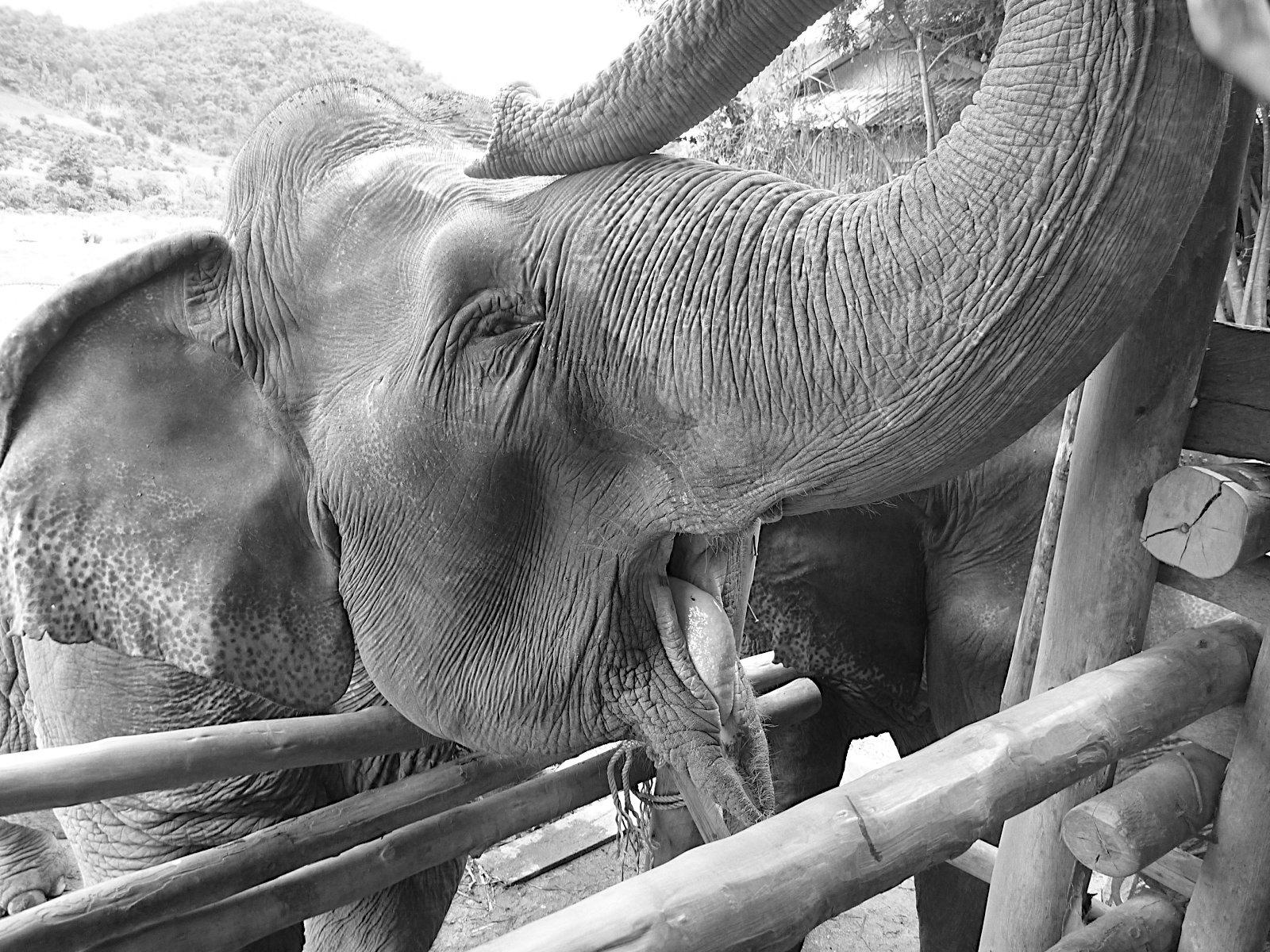Elephant Nature Park_08_10 062