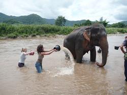 Elephant Nature Park_08_10 097