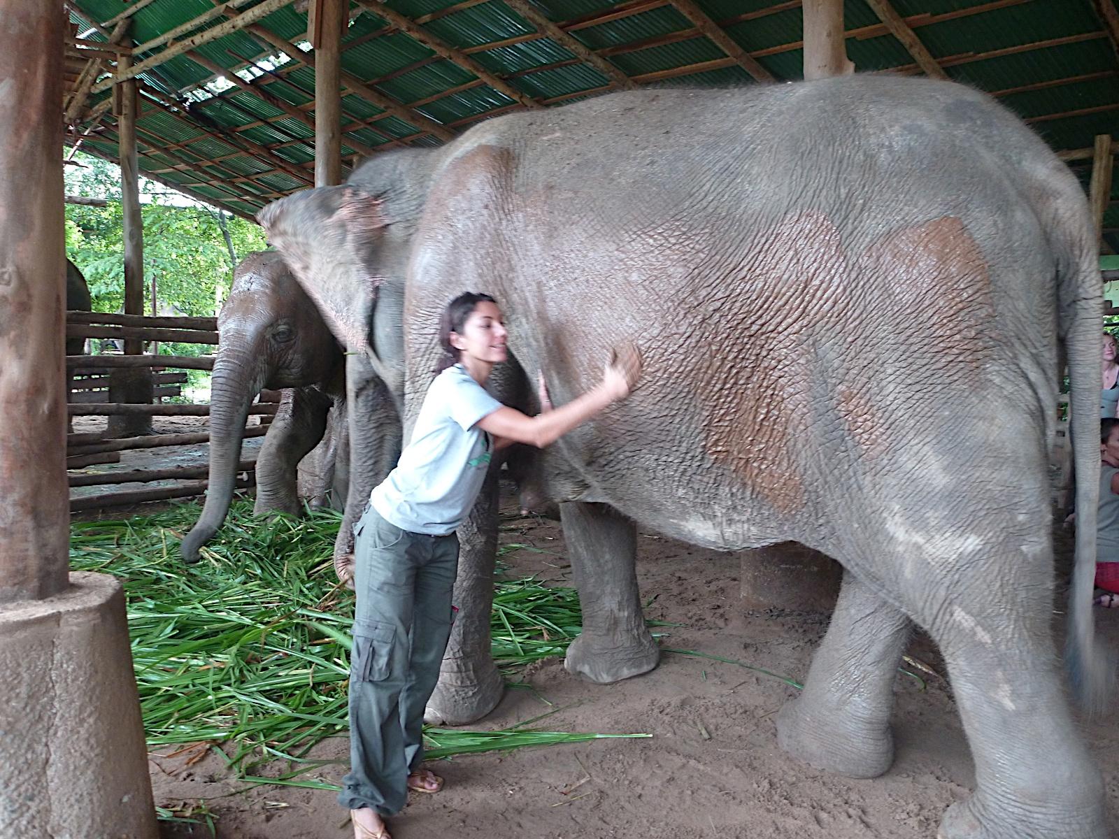 Elephant Nature Park_08_10 355