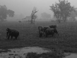 Elephant Nature Park_08_10 297