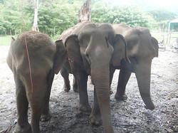 Elephant Nature Park_08_10 235