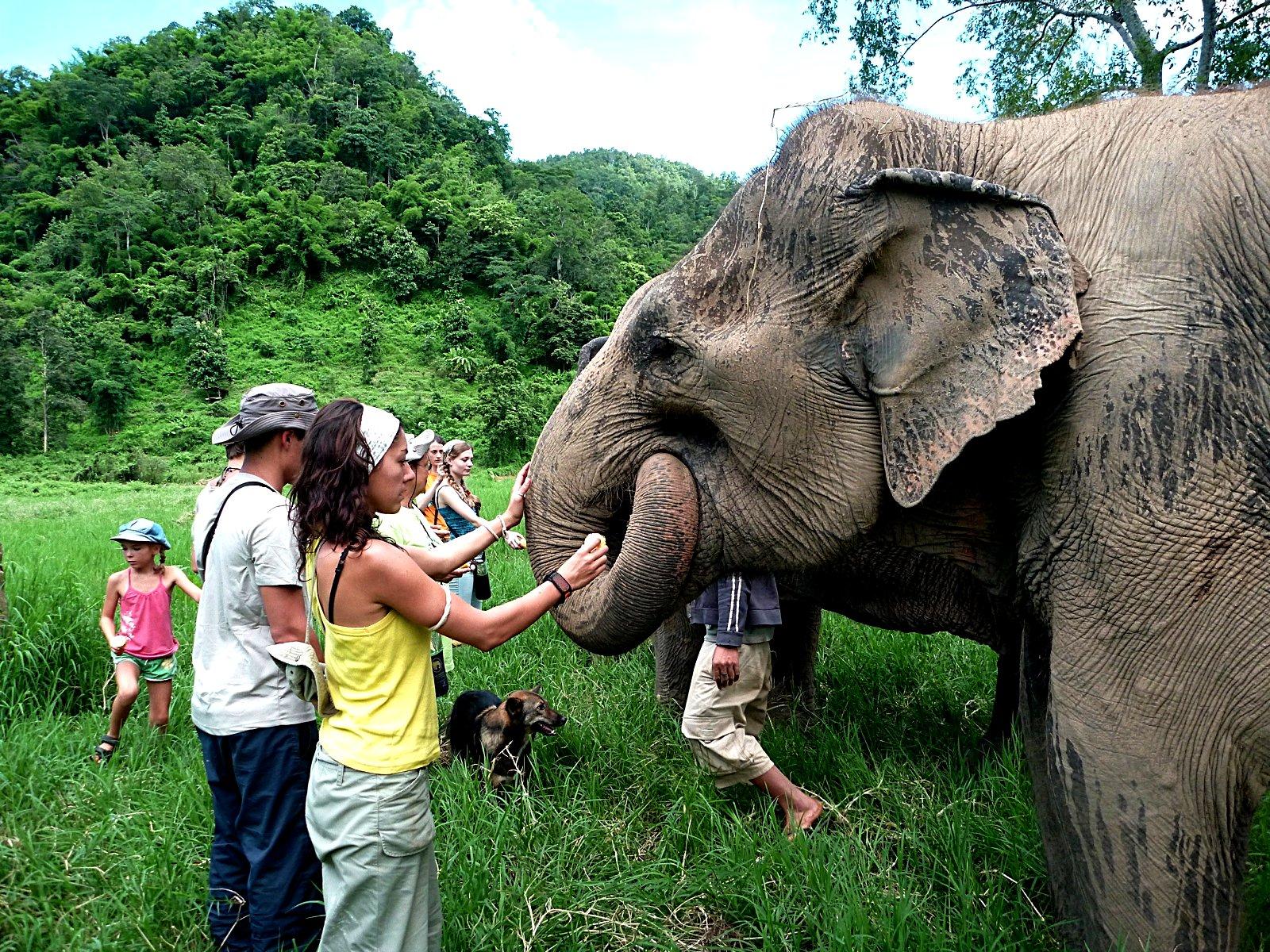 Elephant Nature Park_08_10 980