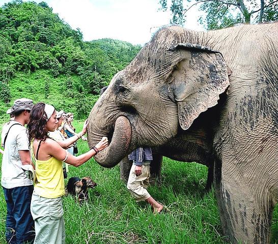 Elephant Nature Park Sanctuary