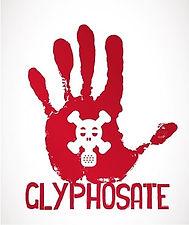 lifespa-image-gmo-wheat-glyphosate-deadl