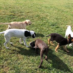 Puppy Class Lecco 01.jpg