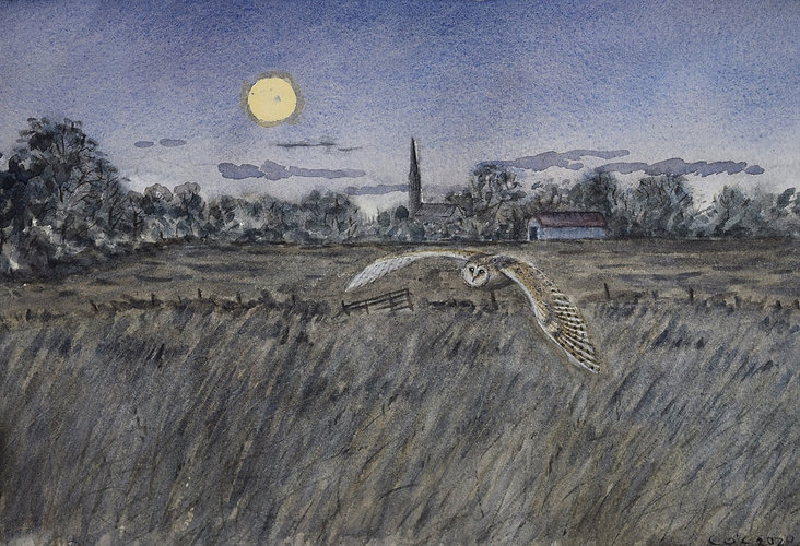 Barn owl night.JPG