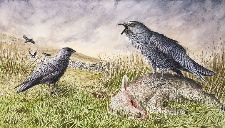 Raven lamb paintin watercolour